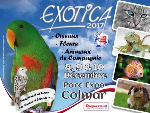 Affiche Exotica 2017 paysage
