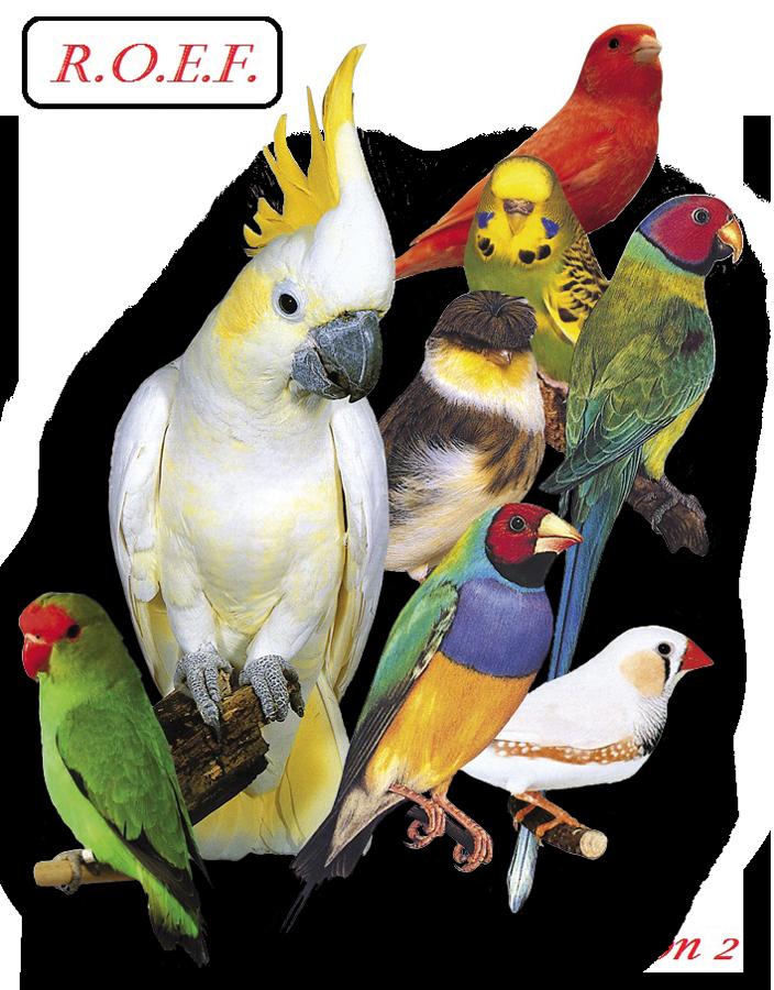 Région Ornithologique Est France